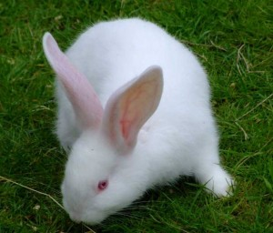 rabbit-28